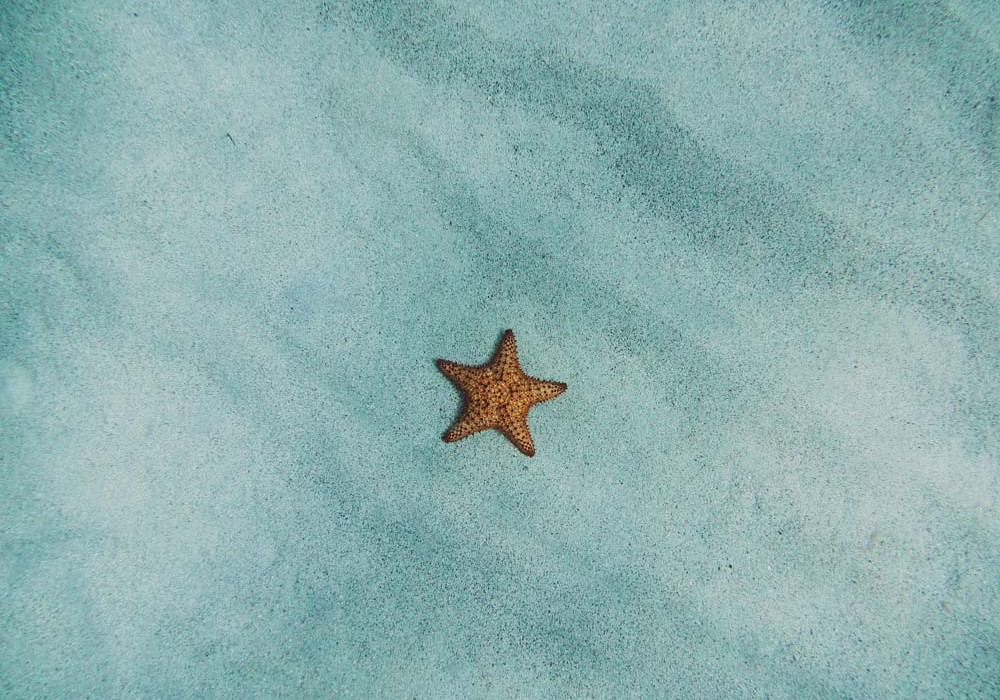 lone star by amy-humphries edited